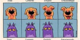 Emociones de mis mascotas