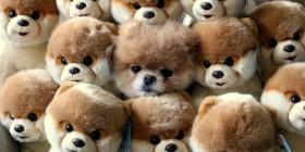 Encuentra el perrito de verdad