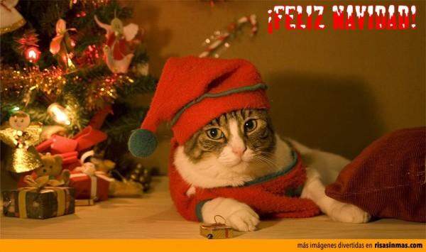 Felicitaciones navideñas: Gato Papa Noel