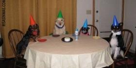 Fiesta de perros