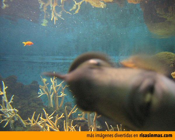 Fotobomba de un pez