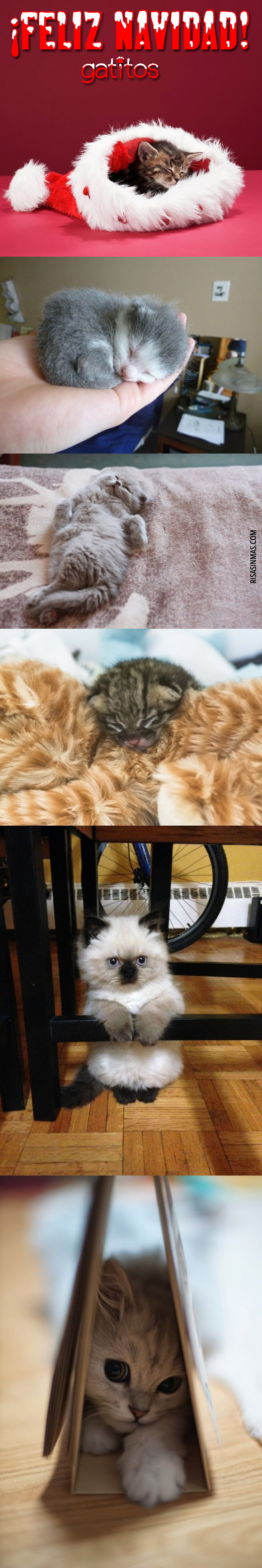 Galería de fotos de gatitos