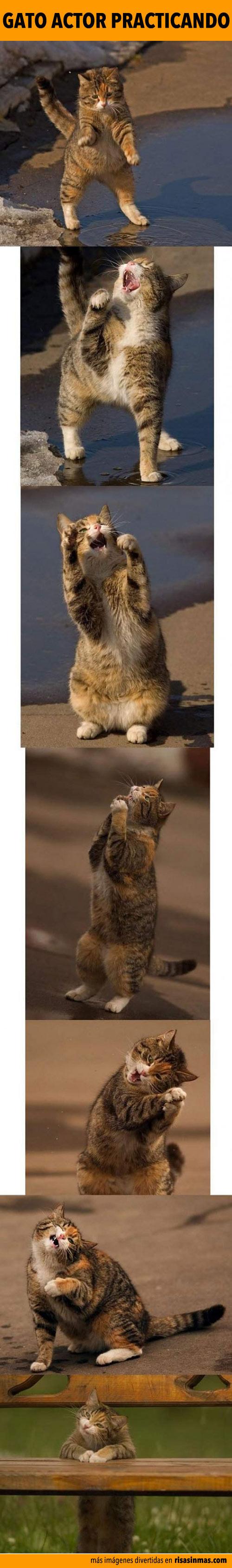 Gato actor practicando