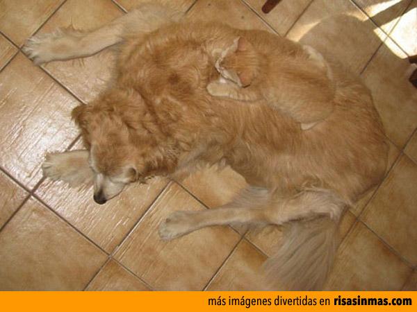 Gato camuflaje experto