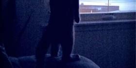 Gato esperando a su dueño