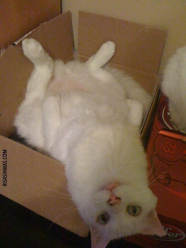 Gato y su regalo de Navidad