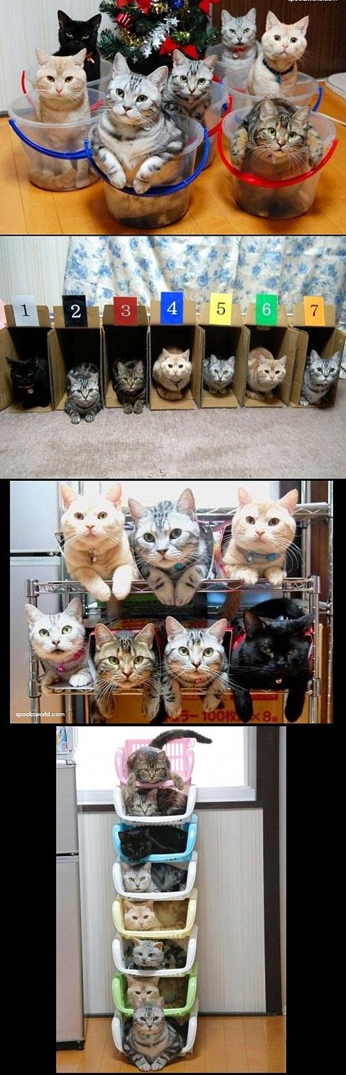 Gatos ordenados