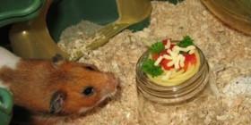 Hamster comiendo pasta