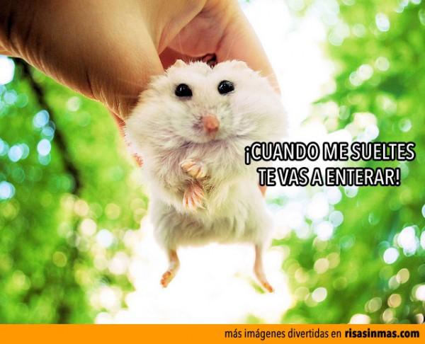 Hamster enfadado