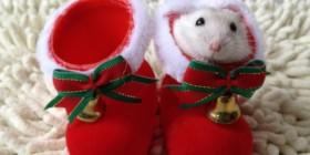 Hamster navideño