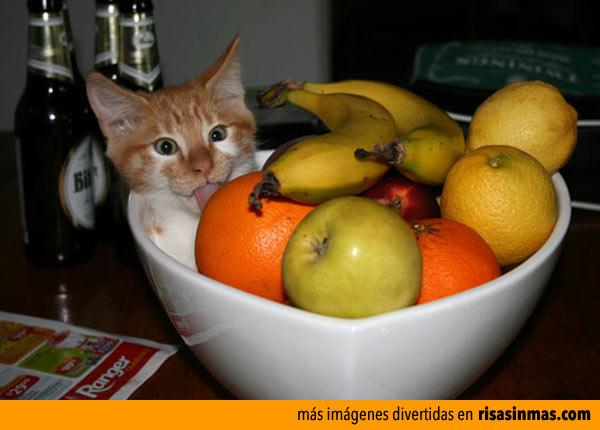 Hay que comer fruta