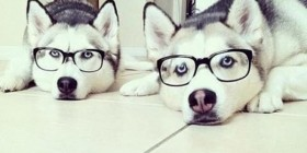 Huskies Hipsters