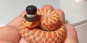 La elegancia hecha serpiente