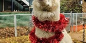 Llama navideña