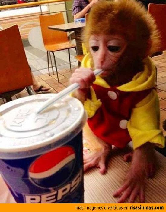 Mono bebiendo un refresco