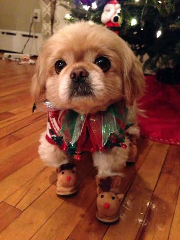 Otro perrete sufriendo la Navidad