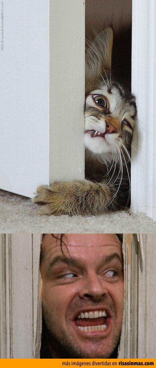 Parecidos razonables: Gatito y Jack