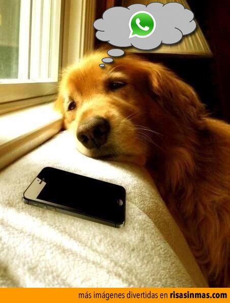 Pensando en el WhatsApp
