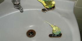 Periquitos skaters