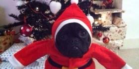 Perrete Noel