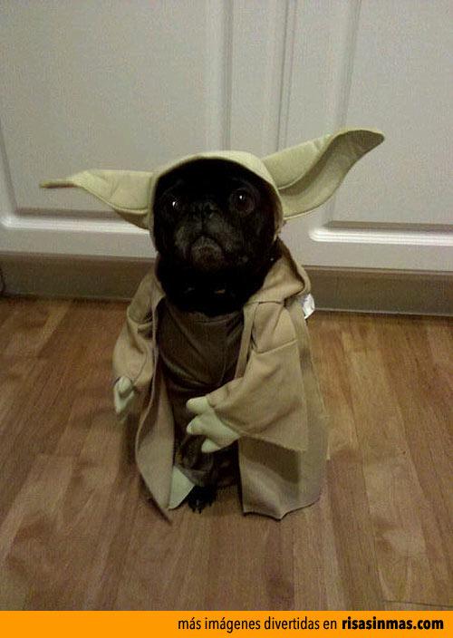 Perrete Yoda