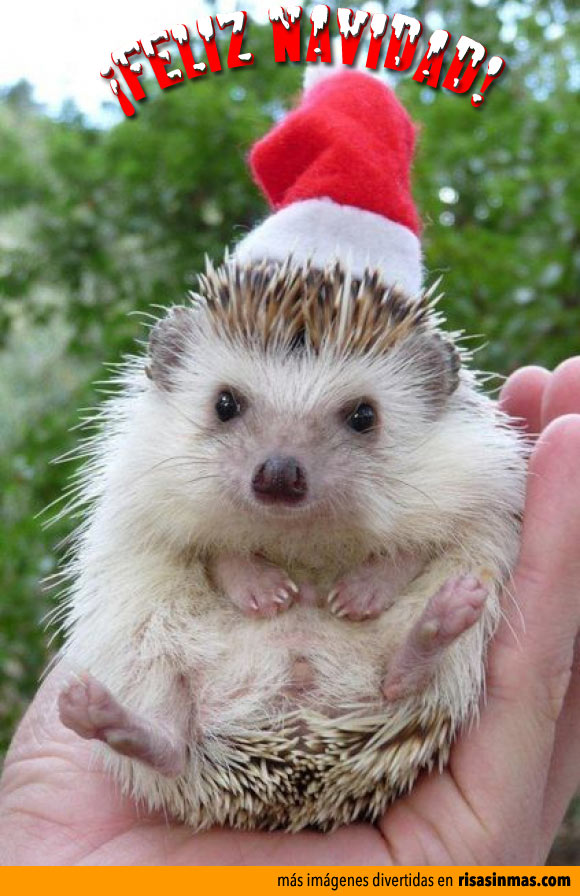 Postales de Navidad: Erizo