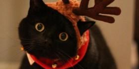 Postal de Navidad: Gato