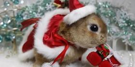 Postales navideñas: Conejito