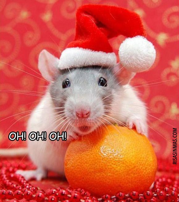 Rata Noel