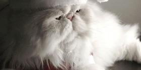 Si Papá Noel fuera un gato