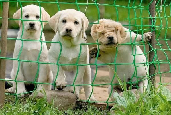 Tres niveles de curiosidad