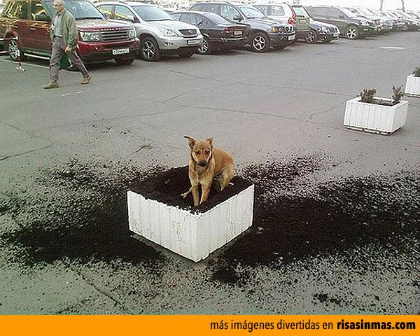 Tu perro en la calle