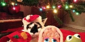 Un gato al que no le gusta la Navidad