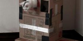 Unas cajas, el mejor regalo