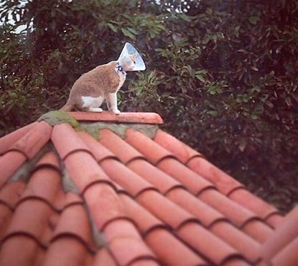 Instalando antena parabólica en el tejado