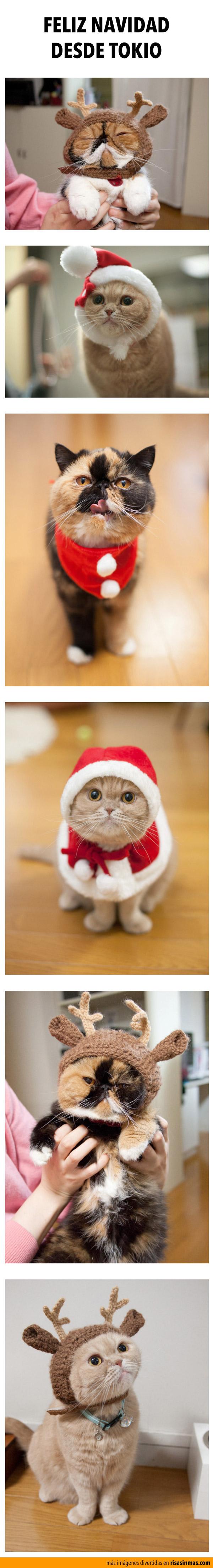Feliz Navidad desde Tokio