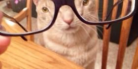 ¿A que me quedan bien estas gafas?