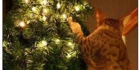 Gatos y árboles de navidad