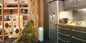 Interior de una casa de pájaros