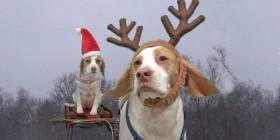 Maymo y Penny arruinan la navidad