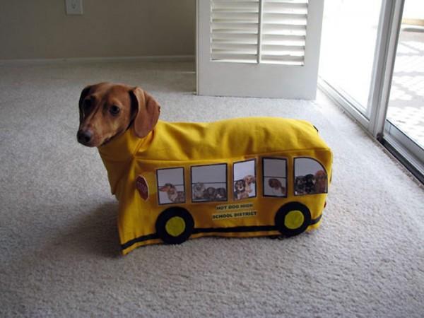 Perro disfrazado de autobús