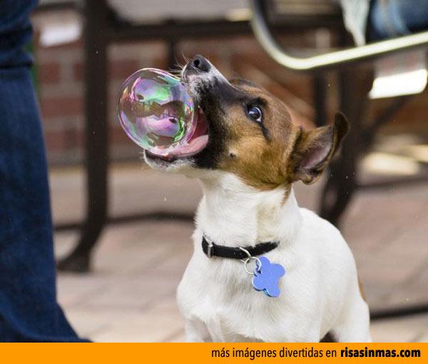 Perro mordiendo un pompa