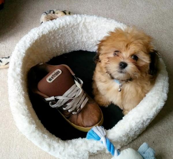 Localizado el ladrón de zapatos