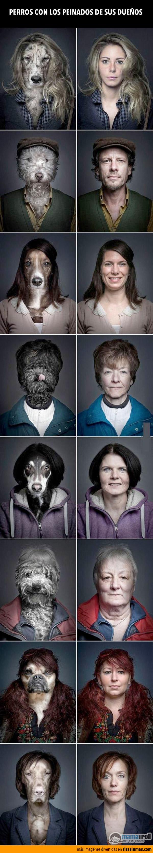 Perros con los peinados de sus dueños