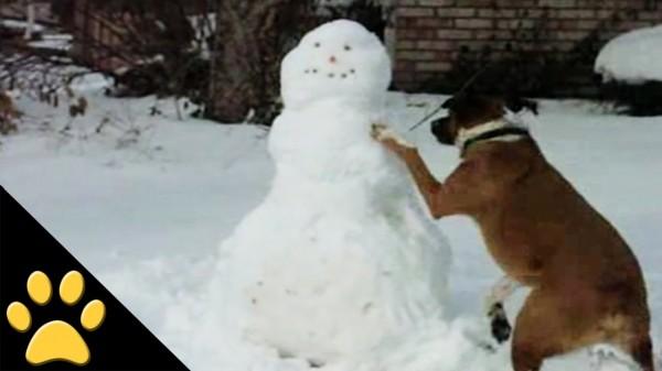 Perros, trineos y muñecos de nieve