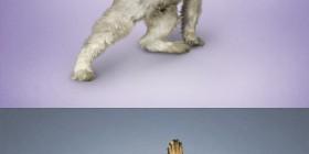 Yoga dogs, perros haciendo yoga