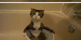 ¿A los gatos no les gusta el agua?