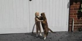 ¿Bailamos un tango?