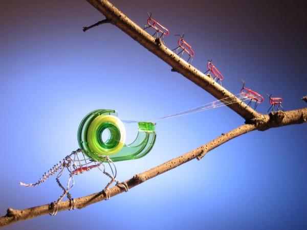 Camaleón cazando una hormiga