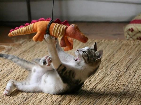 Cocodrilo atacando a un gatito